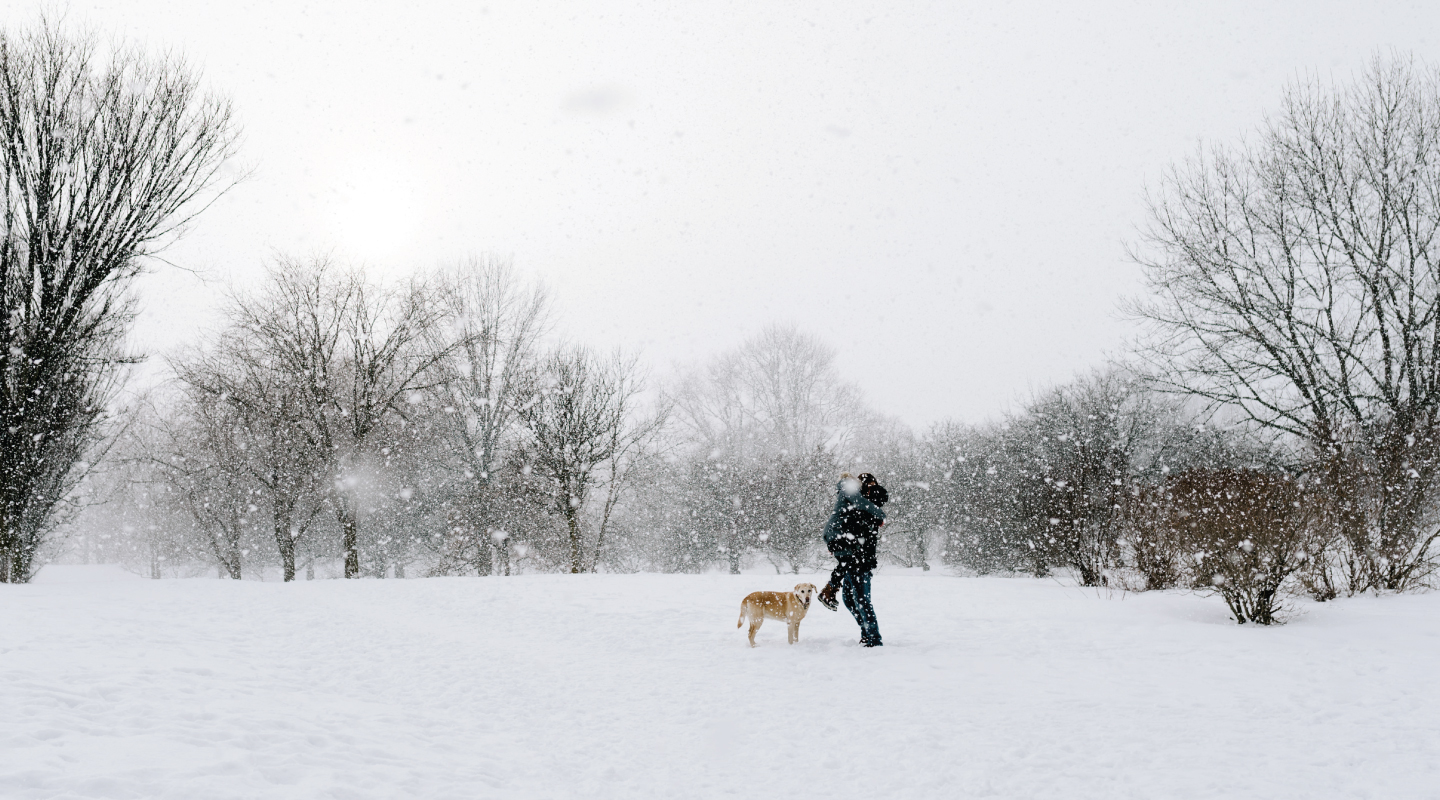 man and woman kissing in a park on a snowy winter day with their dog in a field